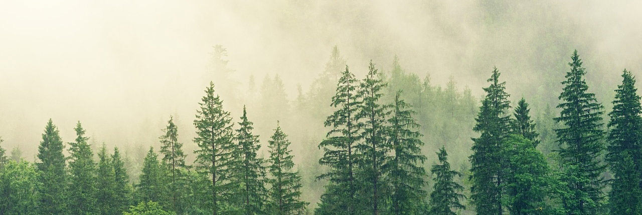 metsa ost, metsa müük, metsamaa haldus, metsamaa müük, kinnistute ost, kasvava metsa ost, metsamaa ost, põllumaa ost